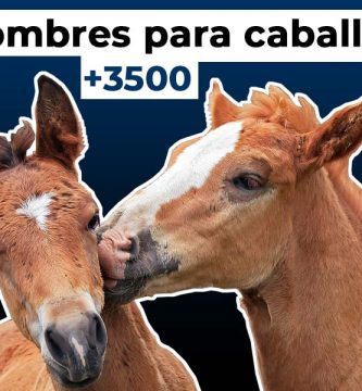 3500 nombres para caballos
